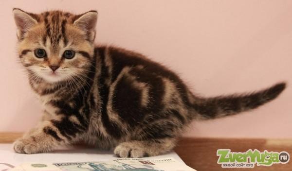 мрамор на золоте котята фото