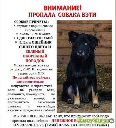 Дать объявление о пропаже находке собаки косметический ремонт оклейка обоями дать объявление