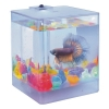 Agua Box Betta Аквариум для петушков, AA