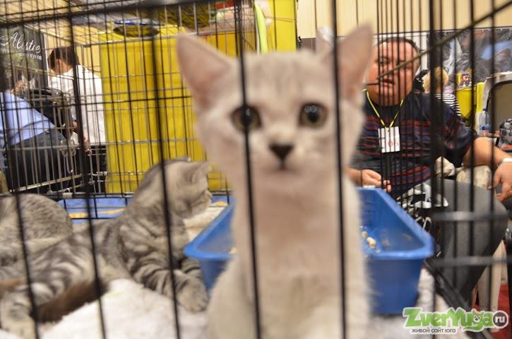 кошки в подарок ростов на дону фотографии буду использовать