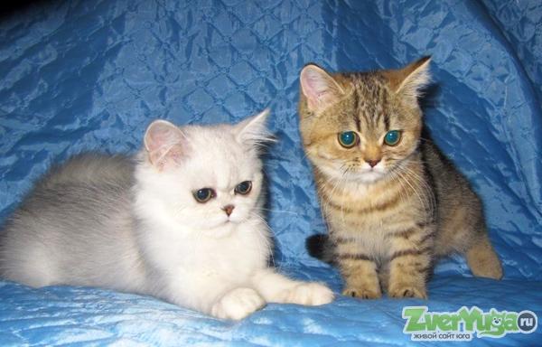 Вы в поиске кота для вязки?