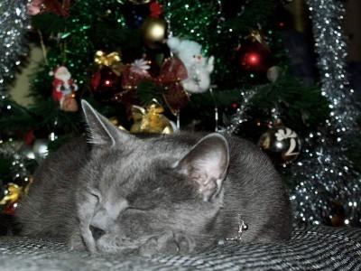 Сны в новогоднюю ночь сбываются